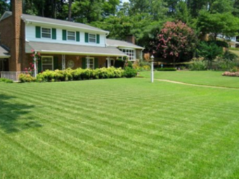 Lawn Care Service in Tampa, FL, 33626