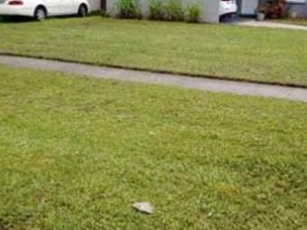 Lawn Care Service in Seminole, FL, 33777