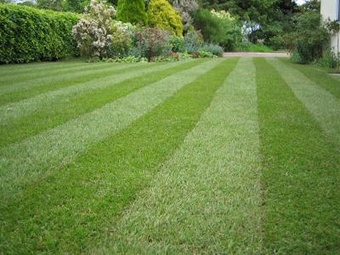 Lawn Care Service in Chicago, IL, 60617