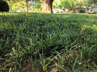 Lawn Care Service in Denton, TX, 76207