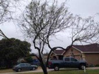 Lawn Care Service in Odem, TX, 78415