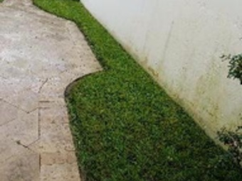 Lawn Care Service in Fort Lauderdale, FL, 33302
