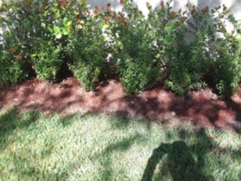 Lawn Care Service in North Fort Lauderdale, FL, 33068