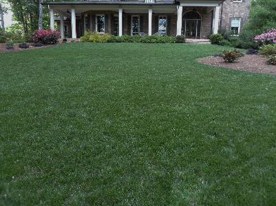 Lawn Care Service in Wesley Chapel, FL, 33543