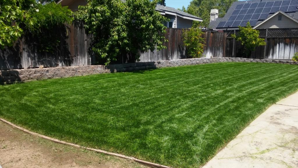 Lawn Care Service in San Jose, CA, 95112