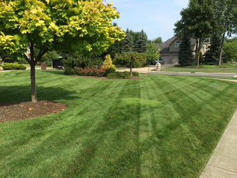 Lawn Care Service in Estero, FL, 33928