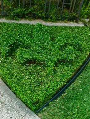 Lawn Care Service in New Orleans , LA, 70131