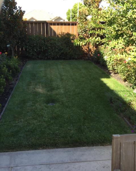 Lawn Care Service in Lodi, CA, 95242