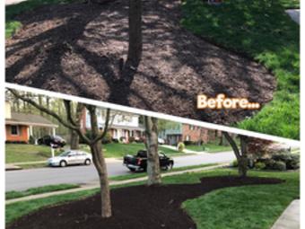Lawn Care Service in Alexandria, VA, 22312