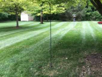 Lawn Care Service in Indianapolis , IN, 46203