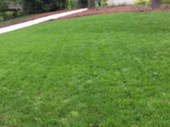 Lawn Care Service in Sugarhill, GA, 30518