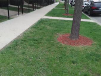 Lawn Care Service in Cicero, IL, 60804