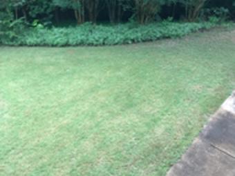 Lawn Care Service in Sugar Hill, GA, 30518