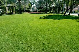 Lawn Care Service in San Antonio, TX, 78245