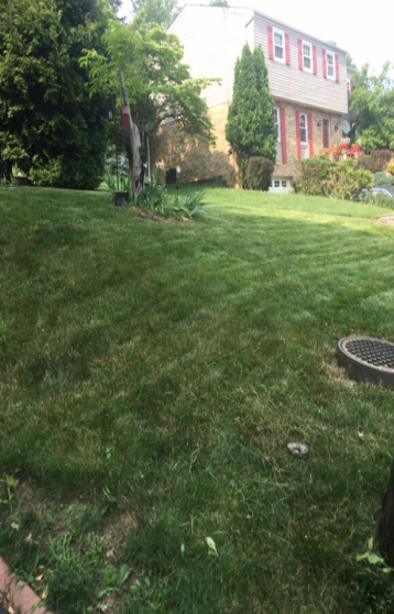 Lawn Care Service in Bethel Park, PA, 15102