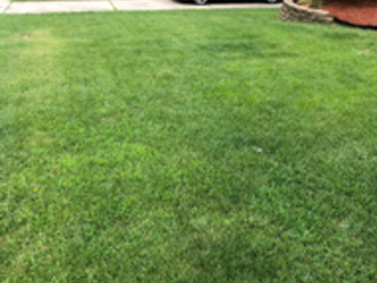 Lawn Care Service in Cincinnati , OH, 45238