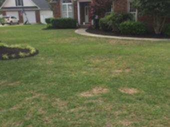 Lawn Care Service in Columbia , SC, 29210