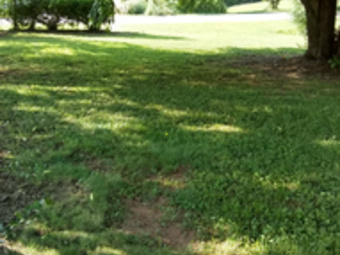 Lawn Care Service in Mount Airy, NC, 27030