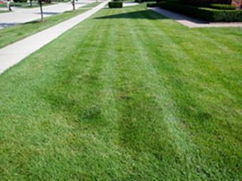 Lawn Care Service in Novi, MI, 48375