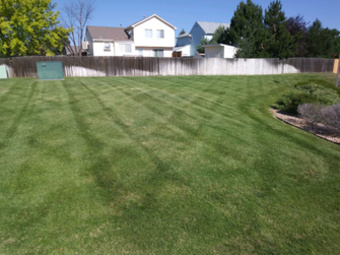 Lawn Care Service in Denver, CO, 80220
