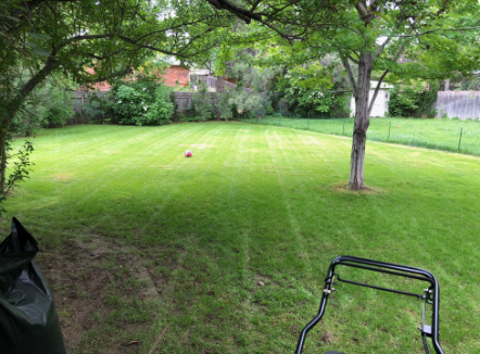 Lawn Care Service in Longmont, CO, 80501