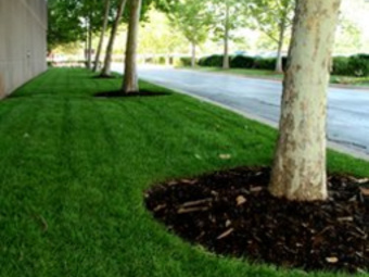 Lawn Care Service in New Orleans, LA, 70131