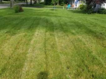 Lawn Care Service in Roselle, IL, 60172