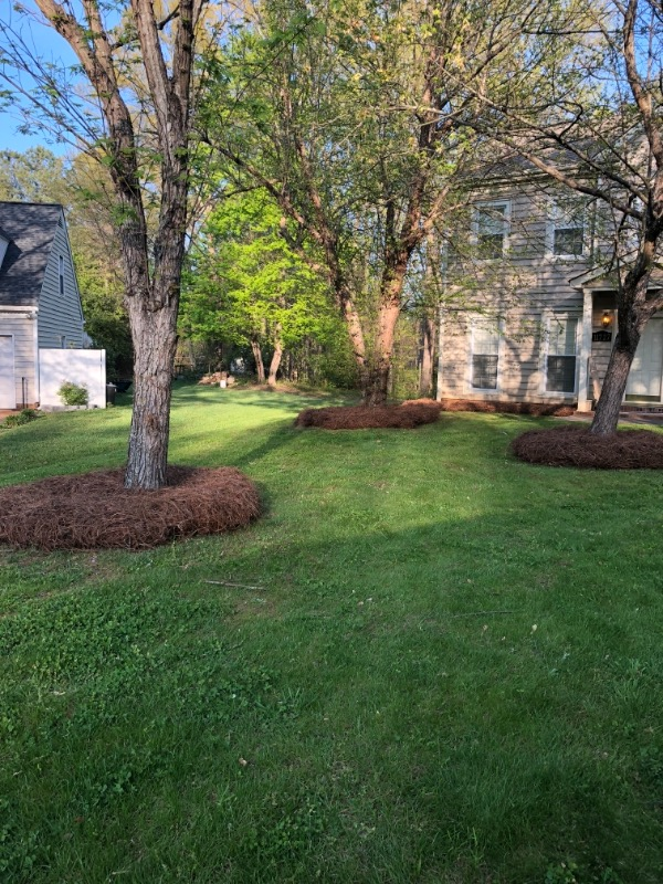 Lawn Care Service in Wingate, NC, 28174