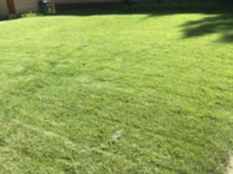 Lawn Care Service in Grain Valley, KS, 66048