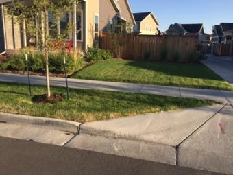 Lawn Care Service in Denver, CO, 80238