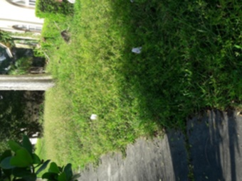 Lawn Care Service in Miami, FL, 33150
