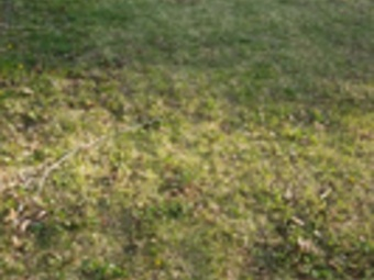 Lawn Care Service in Kansas City, MO, 64111