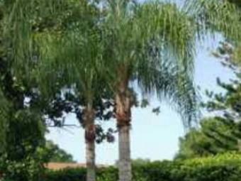 Lawn Care Service in Tampa, FL, 33625