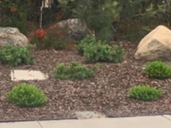 Lawn Care Service in Vista, CA, 92083