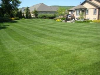 Lawn Care Service in Omaha, NE, 68154