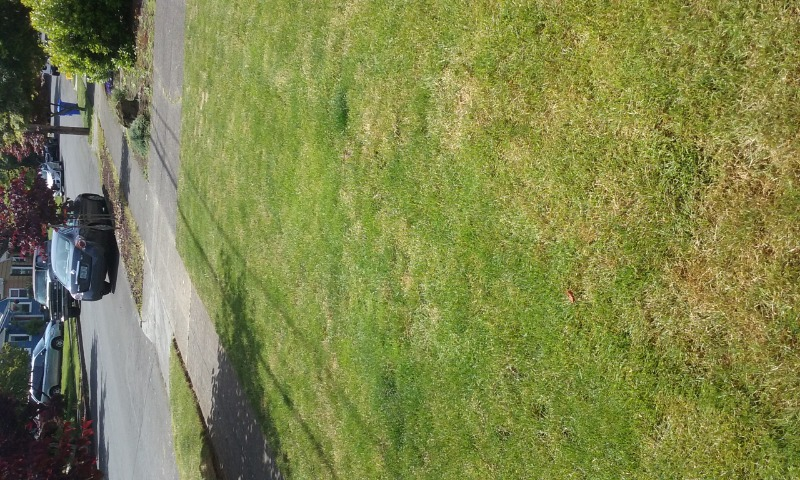Lawn Care Service in Tacoma, OR, 97230