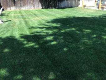 Lawn Care Service in Boise, ID, 83709