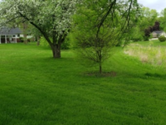 Lawn Care Service in Milwaukee, WI, 53224