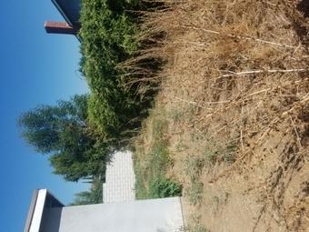 Lawn Care Service in Riverside, CA, 92505