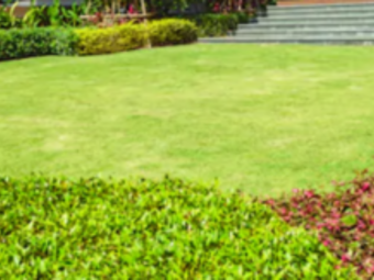 Lawn Care Service in Los Angeles, CA, 91304