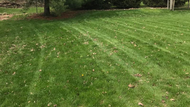 Lawn Care Service in Westfield, IN, 46074