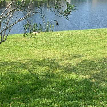 Lawn Care Service in Tampa, FL, 33626