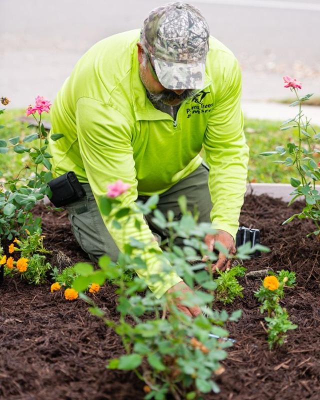 Lawn Care Service in Mc Allen, TX, 78501