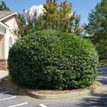 Lawn Care Service in Buford, GA, 30519