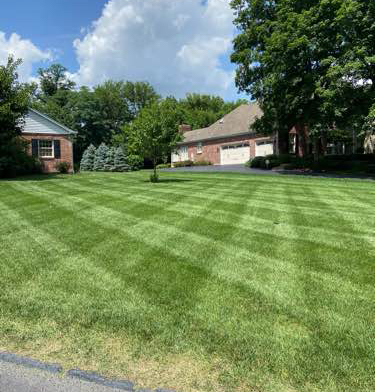 Lawn Care Service in University City, MO, 63390