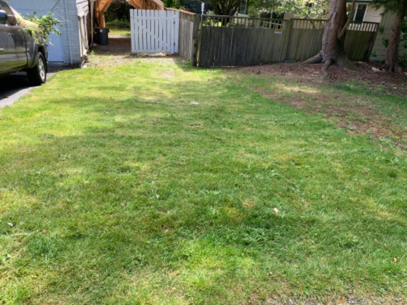 Lawn Care Service in Seattle, WA, 98115