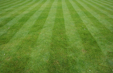 Lawn Care Service in Grover, NC, 28073