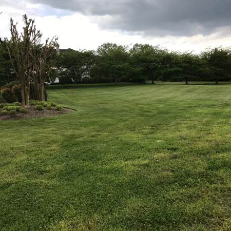 Lawn Care Service in Annapolis, MD, 21403