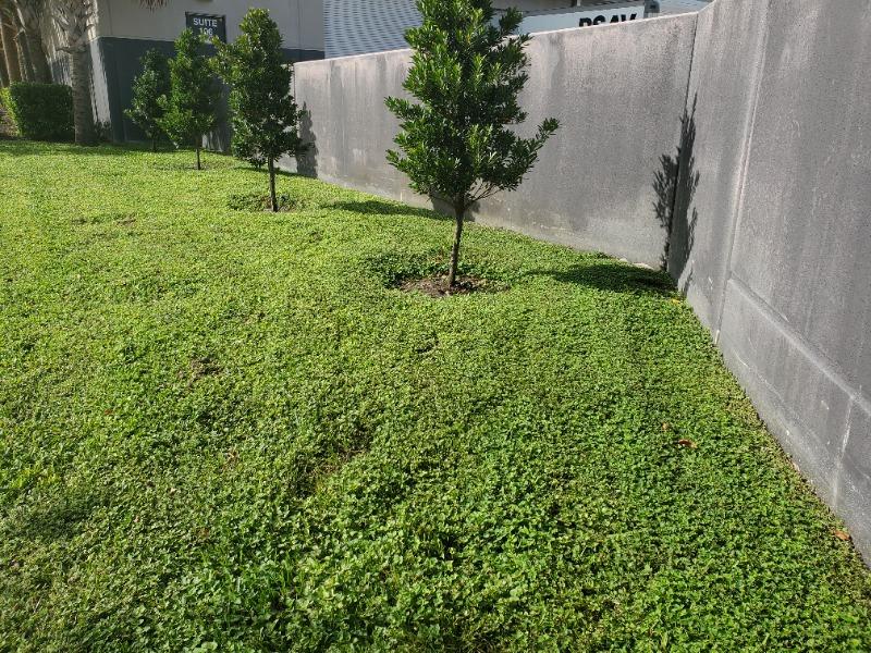 Lawn Care Service in Miami Gardens, FL, 33169