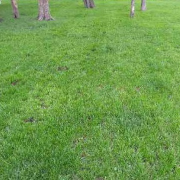 Lawn Care Service in Bryan, TX, 77807